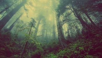 До чого сниться ліс – сонник, тлумачення сну про збір грибів та ягід у лісі, пожежа або лісове озеро, заблукає в лісі