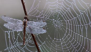 До чого сниться павутина сонник, рвати або прибирати павутину в будинку віником, павук спускається на путіна уві сні
