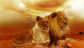 До чого сняться тварини – сонник, тлумачення сну про диких, домашніх або мертвих звірів у сні