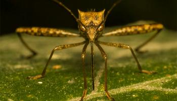 Сонник комарі – до чого сниться комар, тлумачення по сонникам