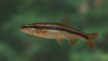 Сонник – риба до чого сниться риба у сні приснилася
